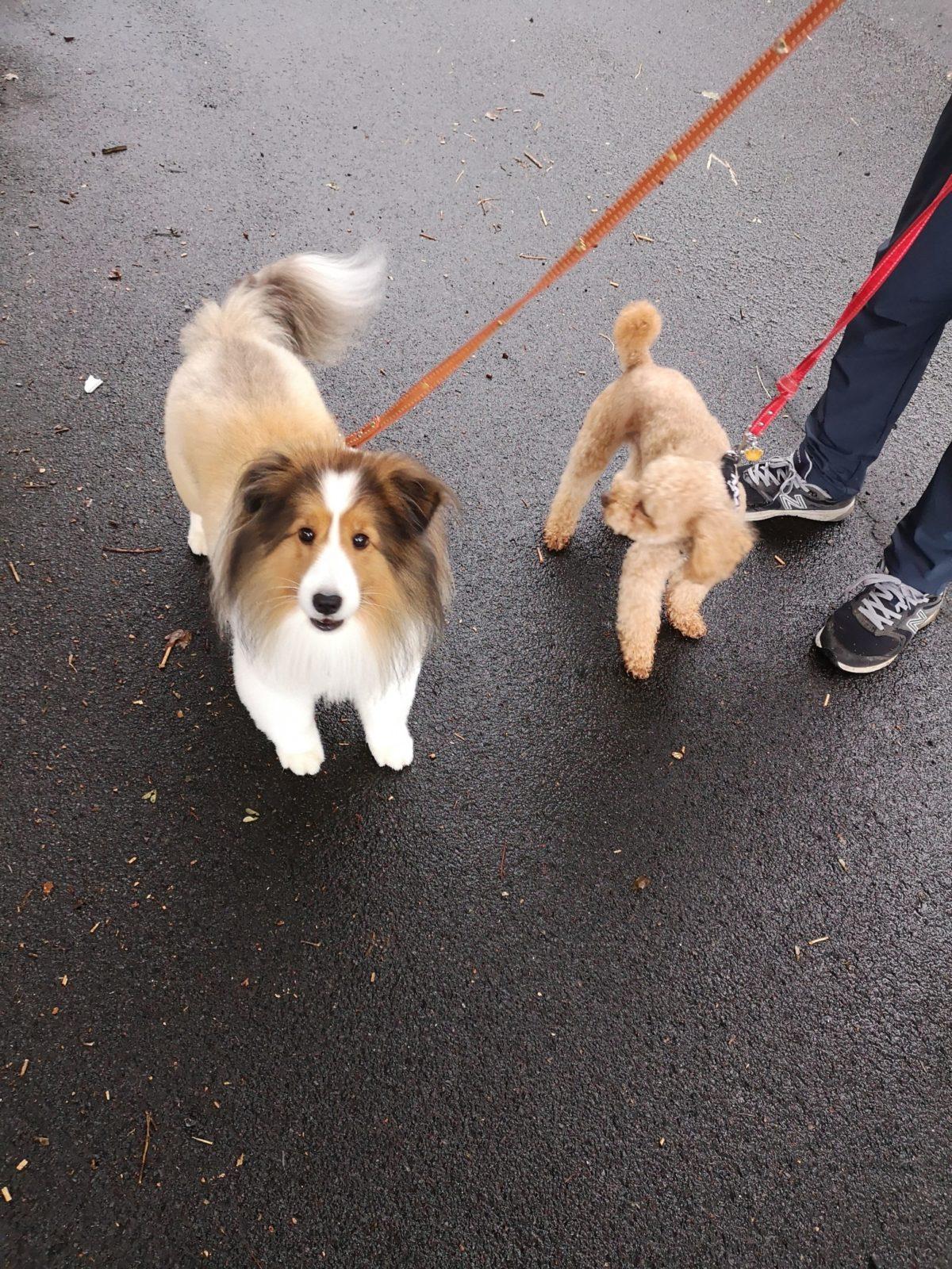 2匹の犬がこちらを見ています